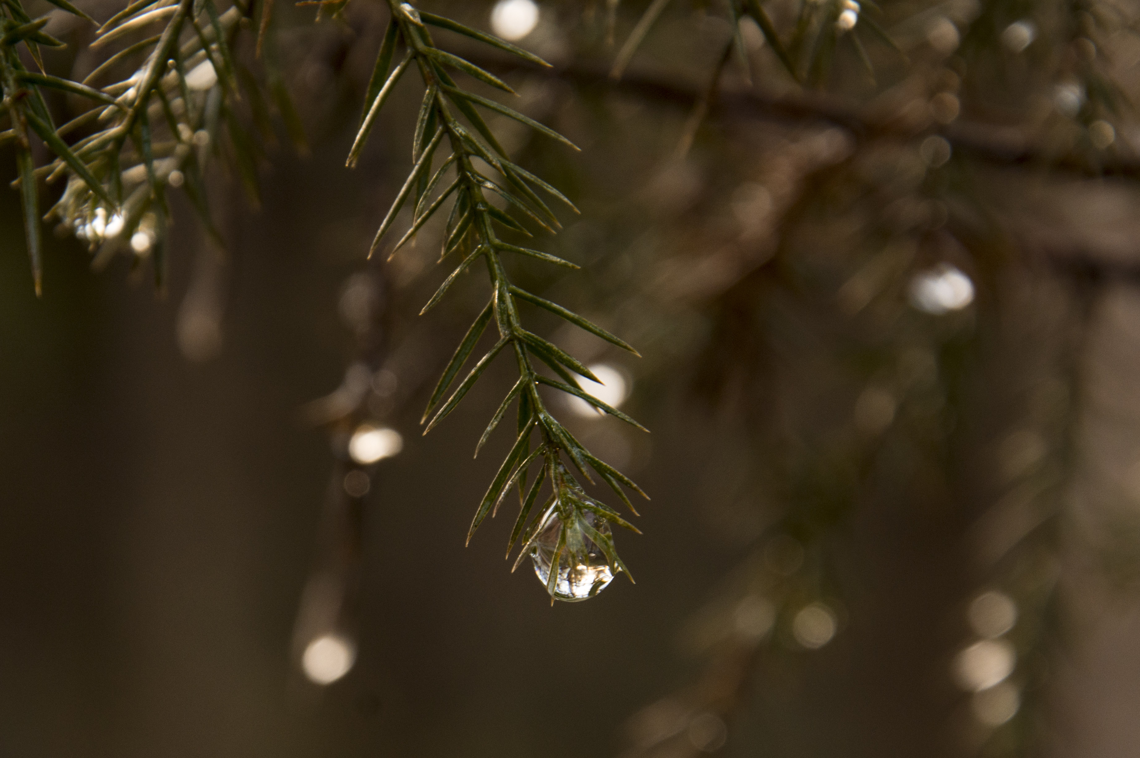 After the rain ...